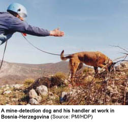 Photo of a mine-detection dog and his handler at work in Bosnia-Herzegovina