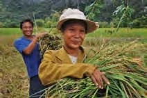 Date: 2012 Description: Farmers in Khammouan province, Laos, harvest crops from cleared land.  © Photo courtesy of MAG