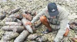 Date: 2012 Description: A member of PM/WRA's Quick Reaction Force inspects World War II-era projectiles found on Tarawa Reef in Kiribati.  © Photo courtesy of the Quick Reaction Force